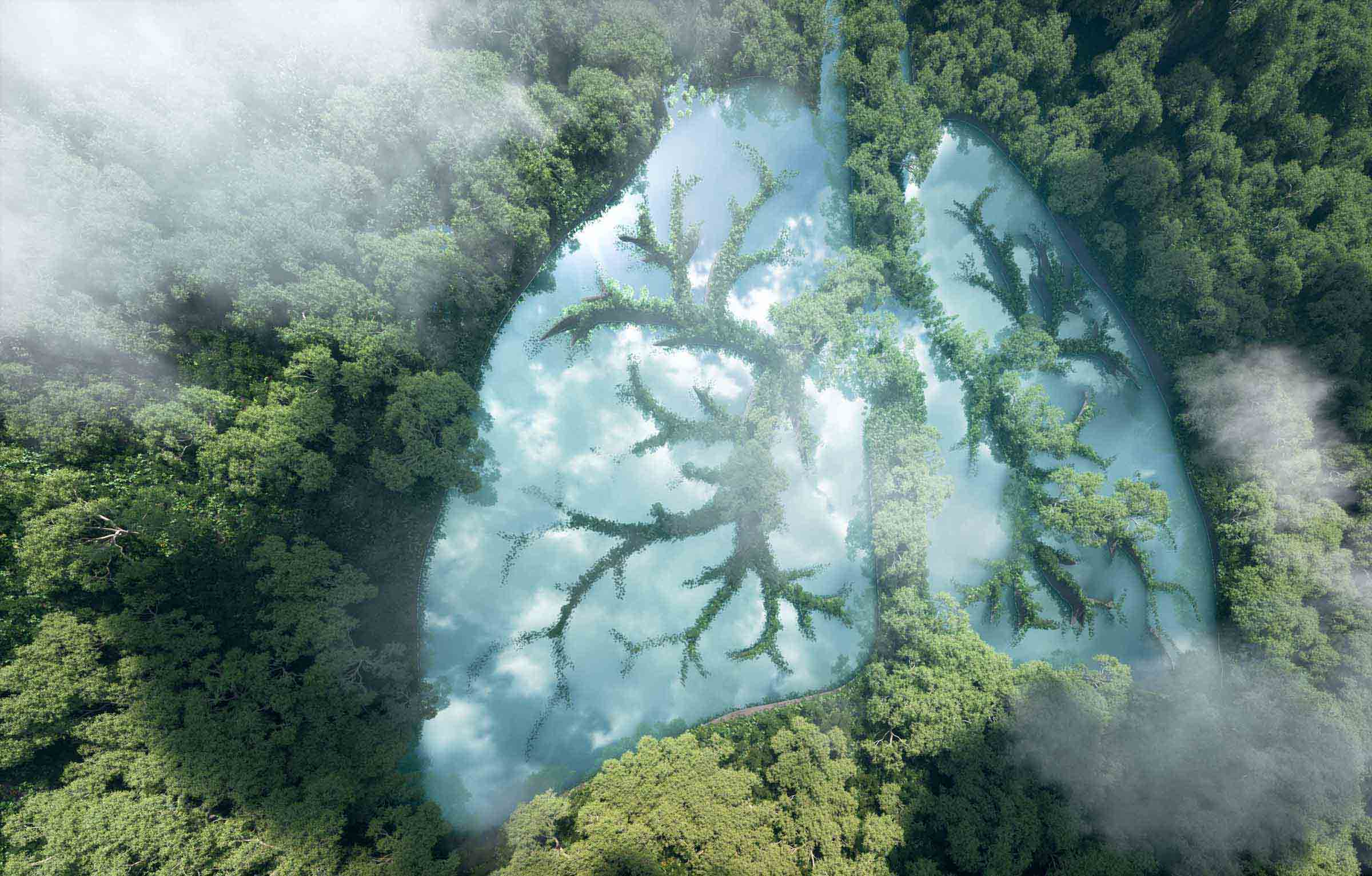 A picture looking down on a forest seeing clouds and a lake in the shape of lungs with green growth moving over the lake like blood vessels on your lungs